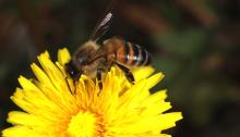 Photo of Bee on Yellow Flower